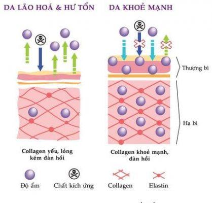 Collagen có tác dụng gì cho da