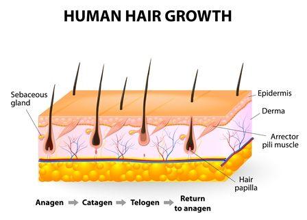 Triệt lông nguyên nhân