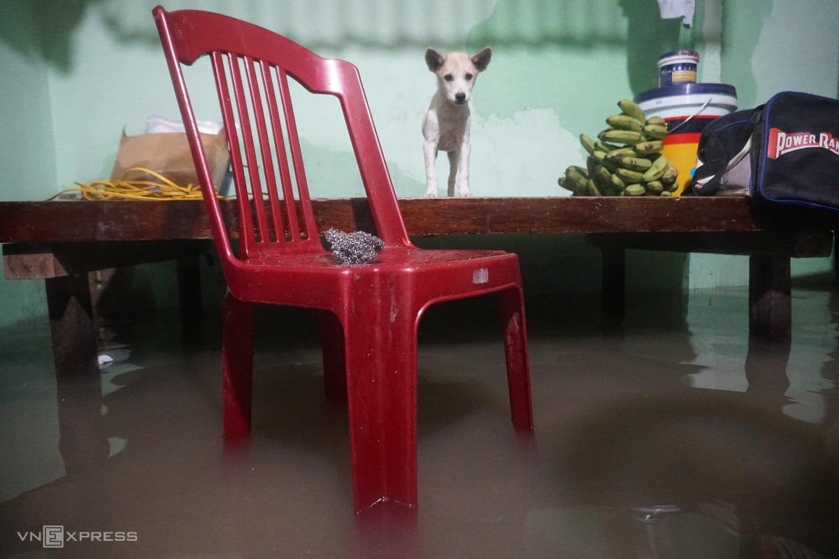 Lũ cô lập nhiều nơi ở Quảng Ngãi